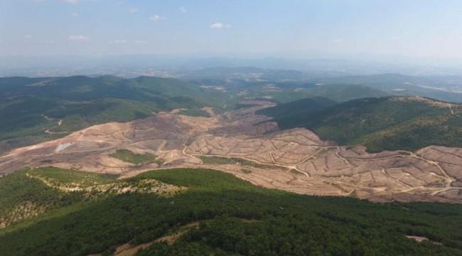Kanadalılar Türkiye'nin göz bebeğinde katliam yaptı: 195 bin ağaç kesildi