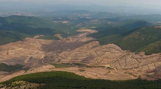 Kazdağları'nda izin verilenin dört katı ağaç kesilmiş