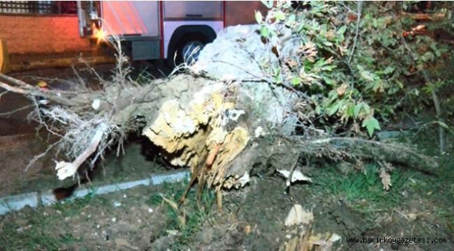 Bakırköy'de yola ağaç devrildi