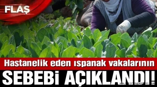 Son dakika… İstanbul'daki ıspanak zehirlenmeleriyle ilgili açıklama