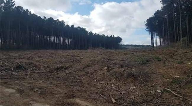İstanbul'da yine orman katliamı! Sarıyer'de neler oluyor?