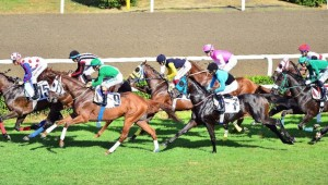 At Yarışları yeniden başlıyor! Tarih verildi..